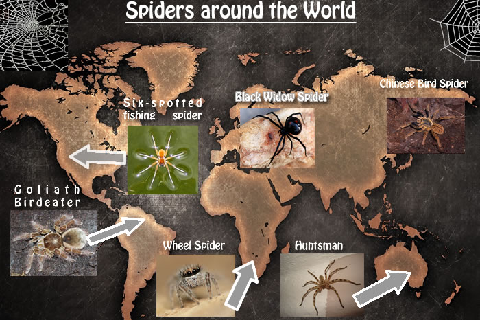 spiders jpag smaller