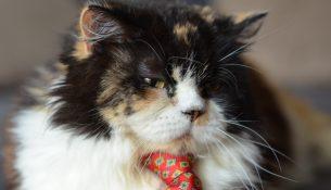 Katze mit Krawatte